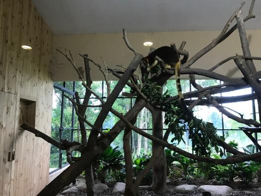 singapur, zoo - 1